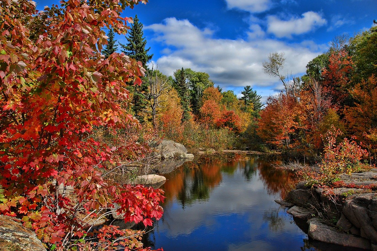 fall lanscape in brilliant red and gold new brunswick, Canada