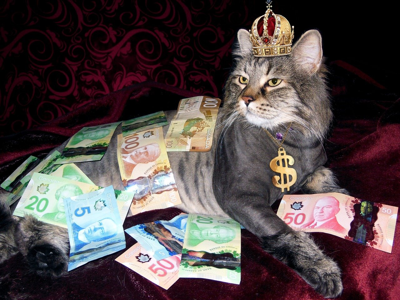 Cat with crown on red background with dollar sign collar and Canadian money